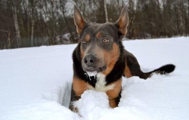 Jax med snömustach